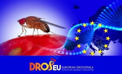 The European Drosophila Population Genomics Consortium (DrosEU)