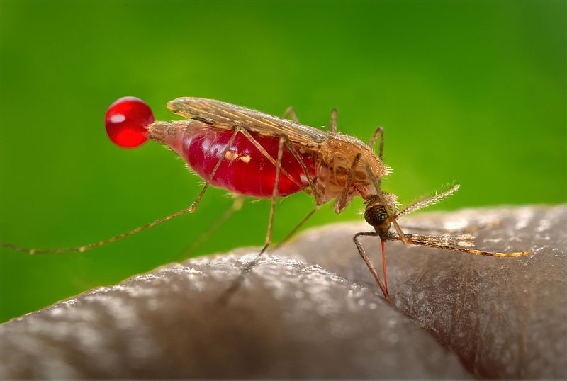 Outreach video: Tracking the genetic footprints of malaria mosquitoes