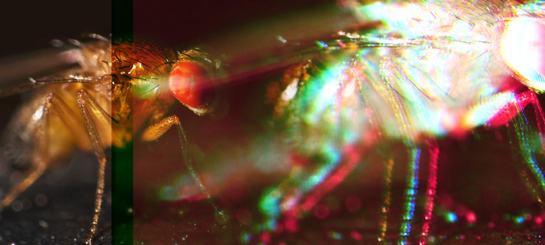 González Lab – Evolutionary and Functional Genomics