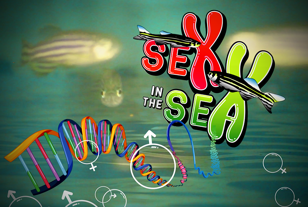 Sex in the Sea ¿Qué define el sexo de los peces?